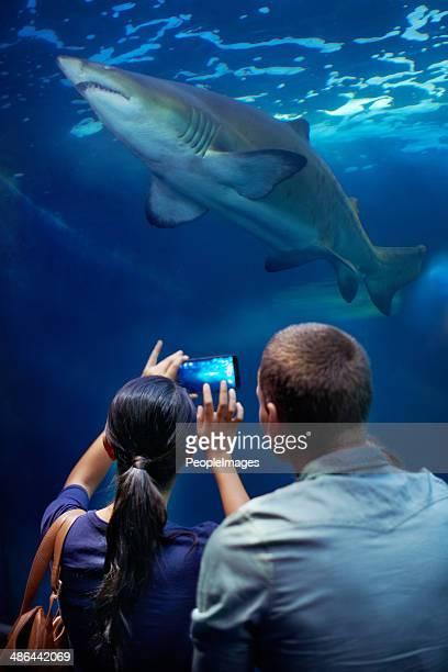 Capturing an aquatic king