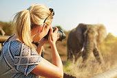 Cropped shot of a female tourist taking photographs of elephants while on safarihttp://195.154.178.81/DATA/i_collage/pi/shoots/806259.jpg