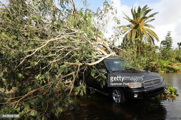 A car covered by a downed tree sits along a flooded road the morning after Hurricane Irma swept through the area on September 11 2017 in Naples...