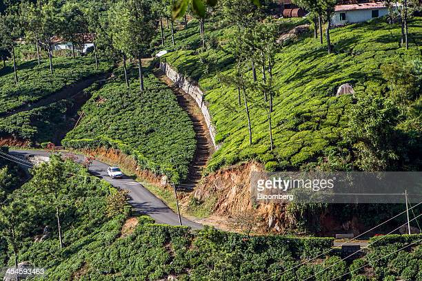 A car drives along a road as it passes through tea estates in Coonoor Tamil Nadu India on Saturday Nov 30 2013 India is the worlds largest producer...