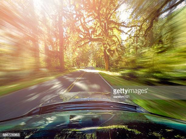 Car driving through forest at speed, Hoh, Washington, America, USA