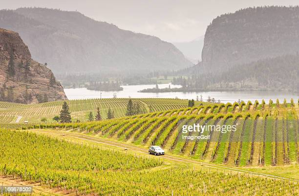 Car Driving Through Rolling Vinyards