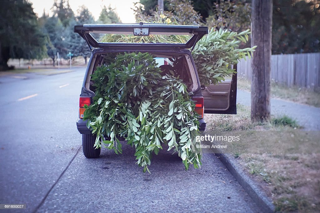 Car Filled With Tree Branches Stock Photo Getty Images