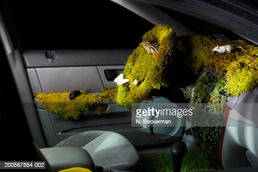 car interior covered with moss grass butterflies and field mice stock photo getty images. Black Bedroom Furniture Sets. Home Design Ideas