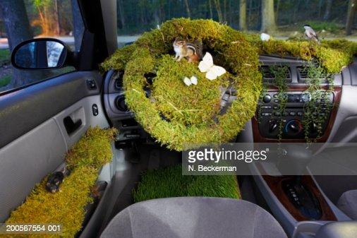 car interior covered with mossgrassbutterfliesfield mice and birds stock photo getty images. Black Bedroom Furniture Sets. Home Design Ideas