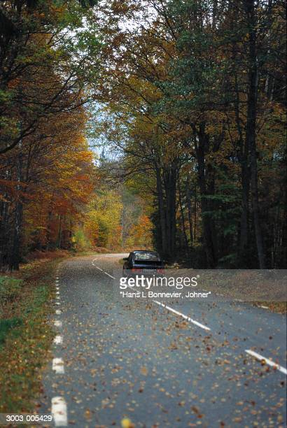 Car on Forest Road in Autumn