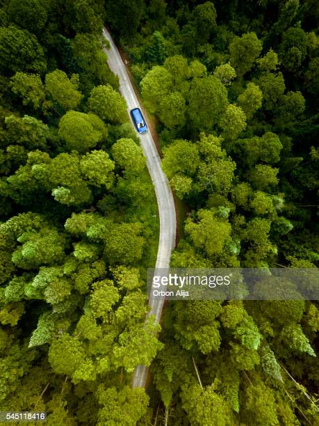 Voiture sur la route dans une forêt de pins