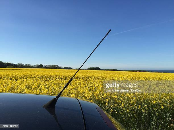 Car Parked By Flowering Field Against Clear Blue Sky