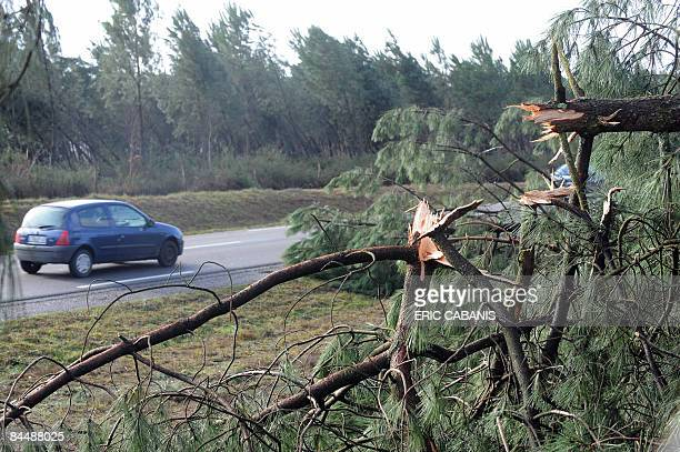 A car passes by fallen branches in the Landes forest on January 27 2009 near MontdeMarsan southwestern France following the weekend storm that left...