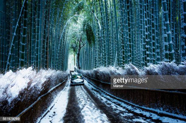 A car passing through the snowy bamboo grove