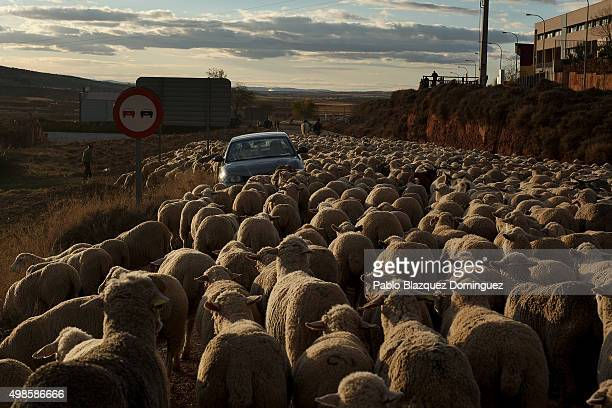 A car stops in a road a sheep herd passes by along the Canada Real Conquense o de los Serranos on November 22 2015 in Alhambra in Ciudad Real...
