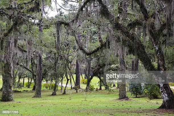 Caracol Park - Canela - Rio Grande do Sul.