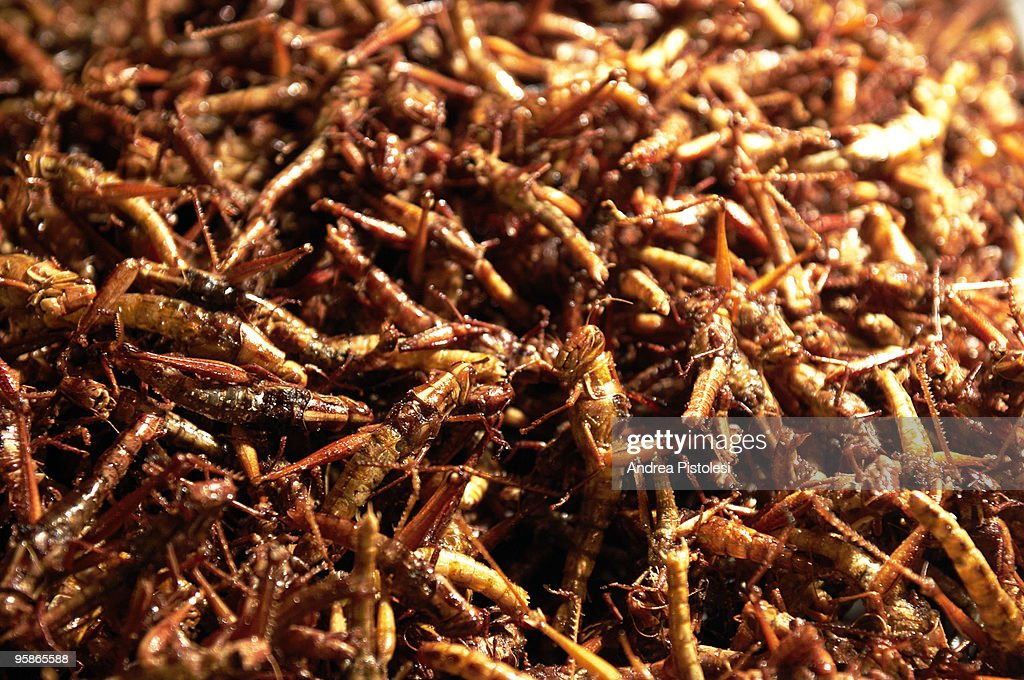 Caramel Grasshopper as snack in Thailand : Stock Photo