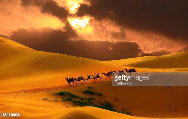 Caravan in the desert