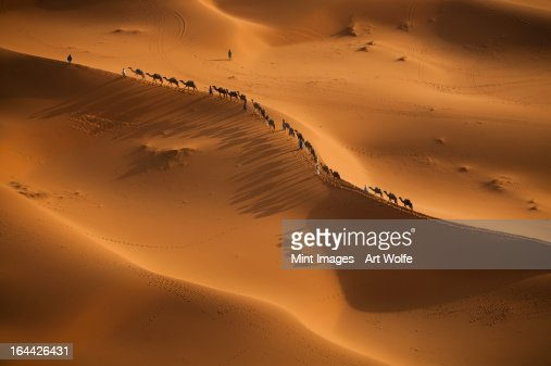 Merchants rider and camels in a line on the sahara desert sands