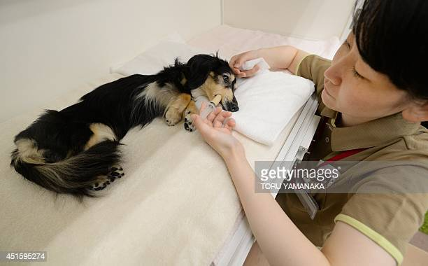 A caretaker feeds fluid diet food to a 12yearold bedridden female dog in her cage at a home for ageing pets where a vet is on call 24 hours a day and...