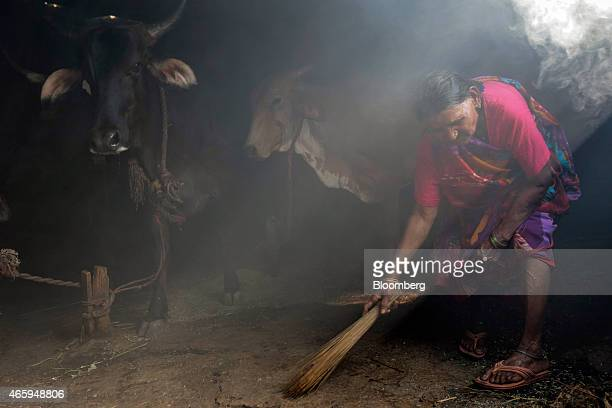 A caretaker sweeps the floor of a cow shelter known as a goshala in Mumbai India on Tuesday March 10 2015 The government of the state of Maharashtra...