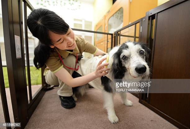 A caretaker takes care of a 14yearold female dog which can't walk well at a home for ageing pets where a vet is on call 24 hours a day and animals...