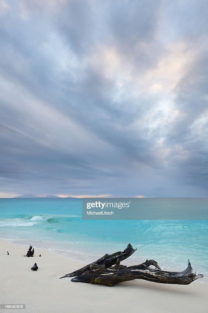 Caribbean Beach Driftwood With Dramatic Sky
