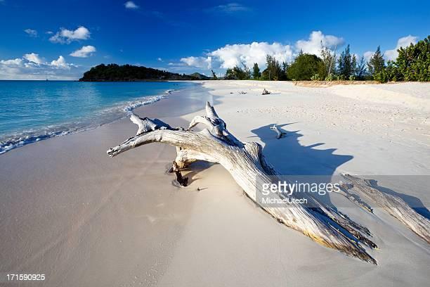 Karibischen Strand mit Treibholz