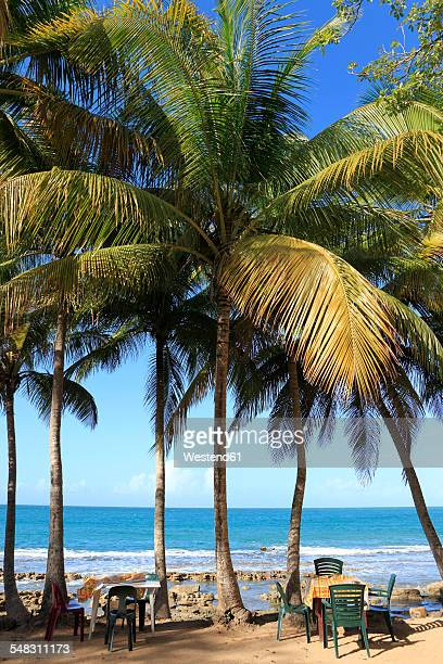Caribbean, Guadeloupe, Basse-Terre, Coconut palms at beach Plage de Clugny