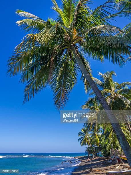 Caribbean, Jamaica, view over the Buff Bay
