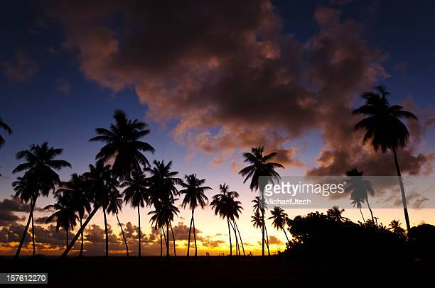 Caribbean Palm Tree Sunset