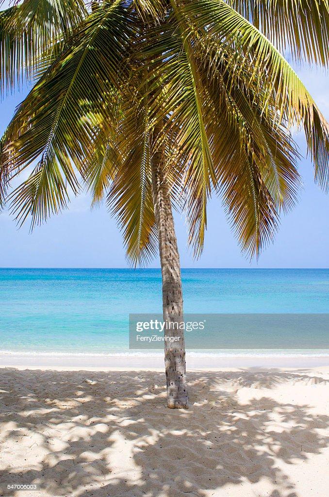 Caribbean sea, Antigua, Palm tree on sandy beach
