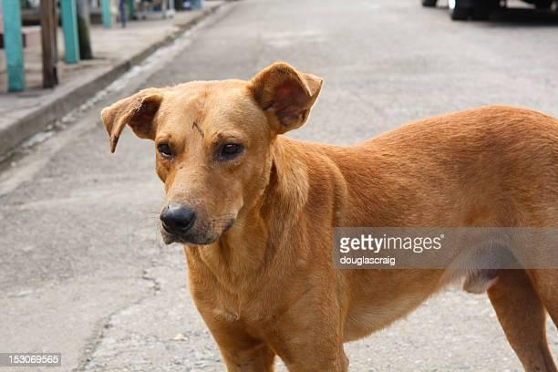 Caraibi Street cane