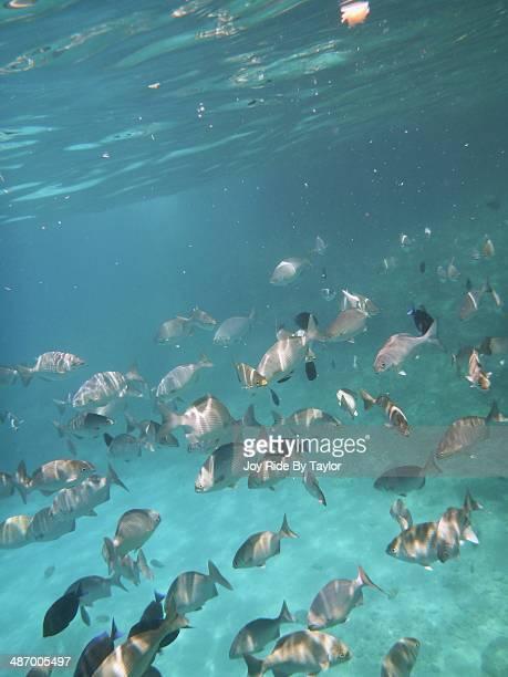 Caribe, Underwater!