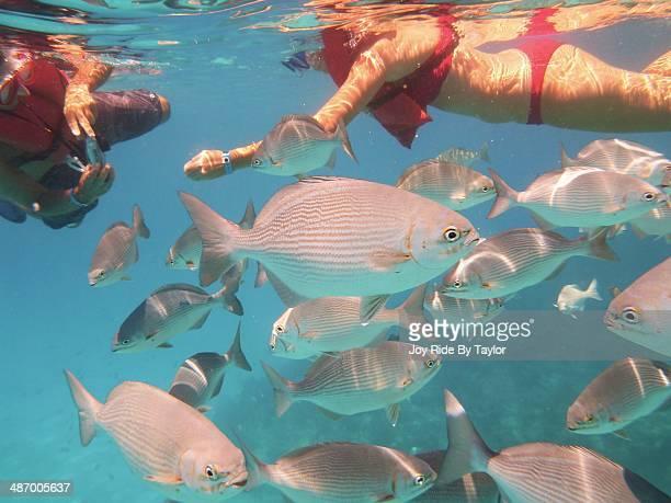 Caribe, Underwater