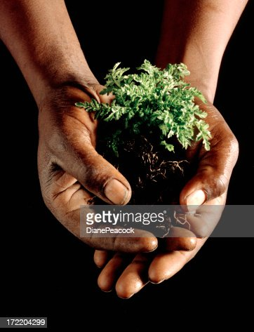 Caring Hands : Stock Photo