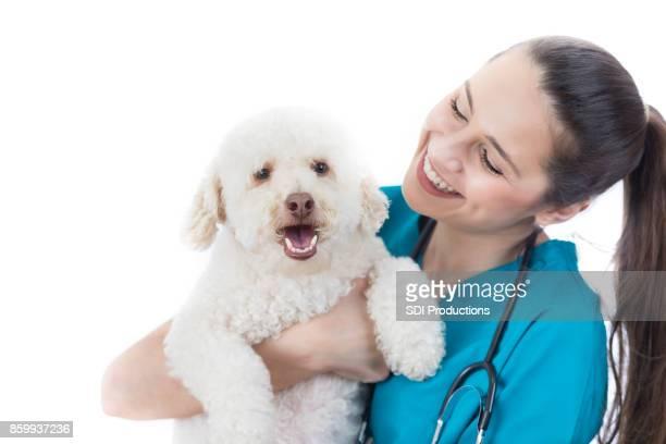 Caring veterinarian looks at cute dog