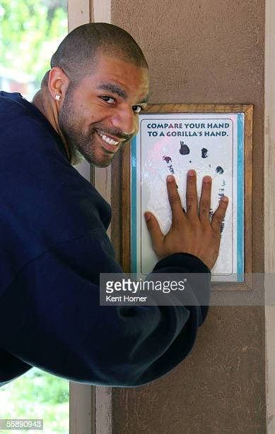 Carlos Boozer of the Utah Jazz compares hand sizes to an adult ape at a Read To Achieve event at the Hogle Zoo on October 10 2005 in Salt Lake City...