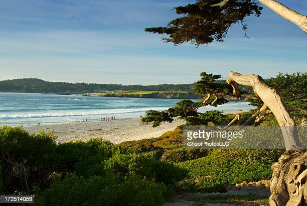 Carmel Landscape