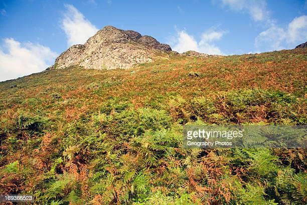 Carn Llidi tor St David's Head Pembrokeshire Wales