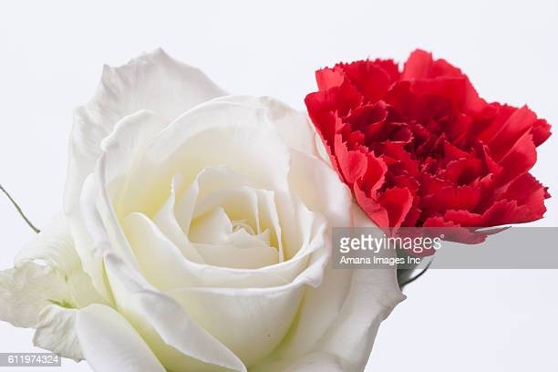 Carnation and white rose