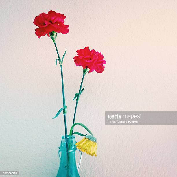 Carnation Flowers In Vase Against Wall