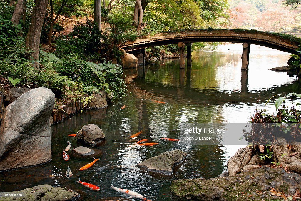 Carp circling in a pond at the Rikugien garden in Tokyo
