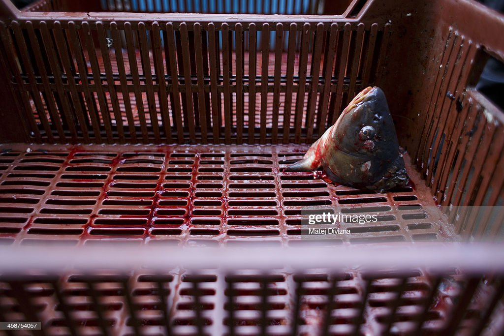 A carp head lies in the crate at fishmonger stall on December 21, 2013 in Prague, Czech Republic. In the days before Christmas, fisherman from Southern Bohemia sell their live fish on street corners for use in the traditional Czech Christmas dishes of fried carp, potato salad and fish soup.