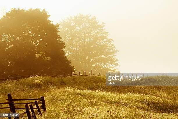 Carpathians meadow