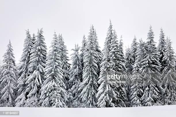 Carpathians Pins