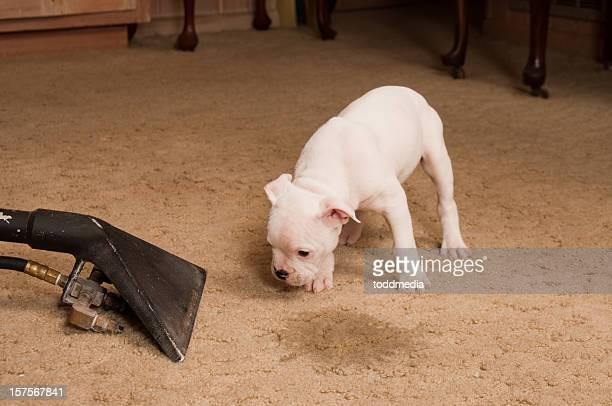 Serviço de limpeza de Carpete