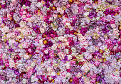 Carpet of beautiful flowers to be used as a background - textured concepts