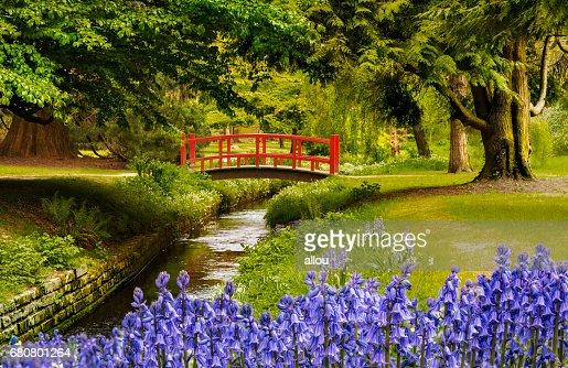 Carpet of bluebells near a bridge in Bournemouth Gardens : Stock Photo