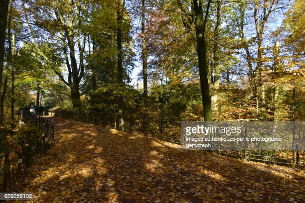 Carpet of leaves on footbridge