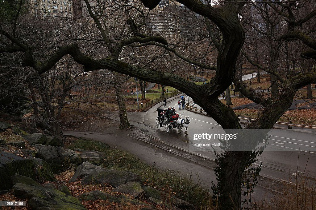 A carriage horse is viewed in central Park on December 22, 2013 in New York City. A carriage horse driver was charged on Friday with animal cruelty after police say his horse was working with a leg injury. Police say they noticed the horse, named Blondie, was limping and struggling to pull the weight of the carriage. Carriage rides are popular with tourists and many feel they have become an iconic part of Central Park. Calling them a form of animal cruelty, newly elected mayor Bill de Blasio promised during his campaign to ban horse carriages from the cityÕs streets and parks.