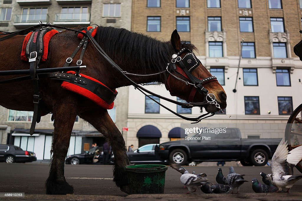 A carriage horse stands at the curb near Central Park on December 22, 2013 in New York City. A carriage horse driver was charged on Friday with animal cruelty after police say his horse was working with a leg injury. Police say they noticed the horse, named Blondie, was limping and struggling to pull the weight of the carriage. Carriage rides are popular with tourists and many feel they have become an iconic part of Central Park. Calling them a form of animal cruelty, newly elected mayor Bill de Blasio promised during his campaign to ban horse carriages from the city's streets and parks.