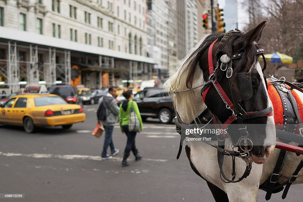 A carriage horse stands in traffic near central Park on December 22, 2013 in New York City. A carriage horse driver was charged on Friday with animal cruelty after police say his horse was working with a leg injury. Police say they noticed the horse, named Blondie, was limping and struggling to pull the weight of the carriage. Carriage rides are popular with tourists and many feel they have become an iconic part of Central Park. Calling them a form of animal cruelty, newly elected mayor Bill de Blasio promised during his campaign to ban horse carriages from the city's streets and parks.
