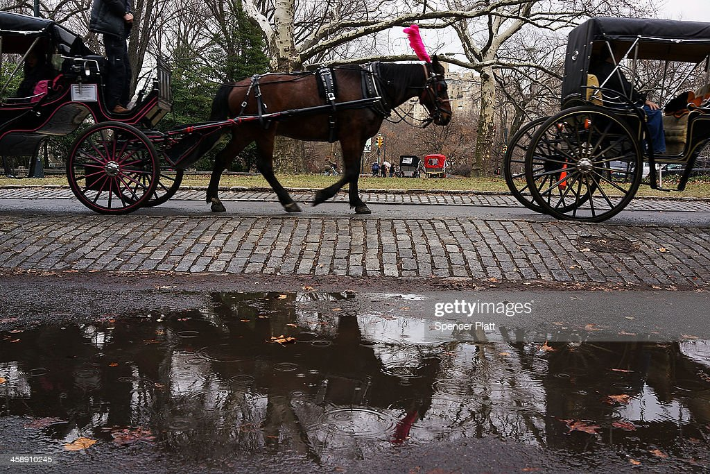 A carriage horse walks in central Park on December 22, 2013 in New York City. A carriage horse driver was charged on Friday with animal cruelty after police say his horse was working with a leg injury. Police say they noticed the horse, named Blondie, was limping and struggling to pull the weight of the carriage. Carriage rides are popular with tourists and many feel they have become an iconic part of Central Park. Calling them a form of animal cruelty, newly elected mayor Bill de Blasio promised during his campaign to ban horse carriages from the city's streets and parks.